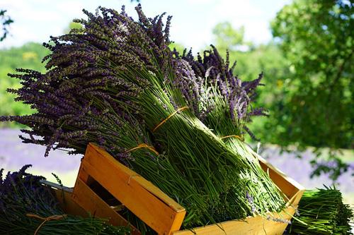 Меж трав или дизайн цветника