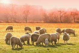 Потенциал овцеводства обсудили в Минсельхозе