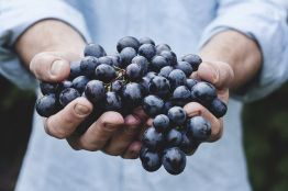 Минсельхоз обучит виноградарству