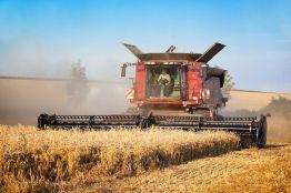 Урожайность зерновых будет выше