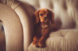 Комфортный диван - залог уюта в доме