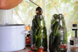 Огурцы для засола и маринования